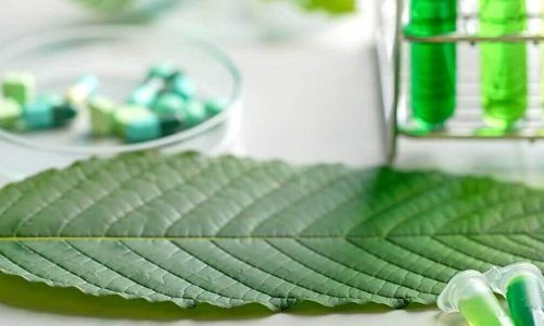 Learn Just How To Research Study CBD Kratom